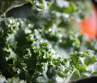 The Truth About Kale: Nutrition, Recipe Ideas, and More   Dieting and Nutrition   Scoop.it
