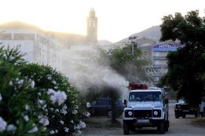 En Corse, la bactérie tueuse de végétaux n'est pas la même qu'en Italie - La Croix | Le Fil @gricole | Scoop.it