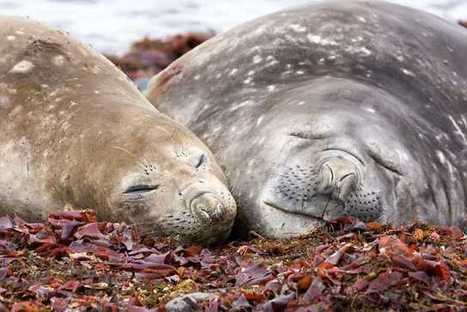 Tagging Seals Improves Ocean Weather Forecasts - SCUBA News | All about water, the oceans, environmental issues | Scoop.it