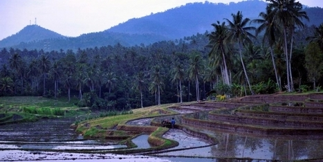 Bright Future for Indonesia's Agriculture Sector | Research On Global Markets | Scoop.it