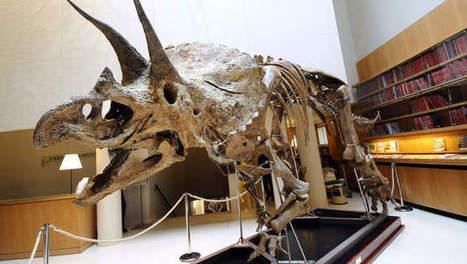 Zeldzaam dinoskelet opgegraven | KAP-ANGELO | Scoop.it