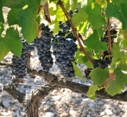 Ventoux, the « coolest » place of the Southern Rhone? | Vitabella Wine Daily Gossip | Scoop.it