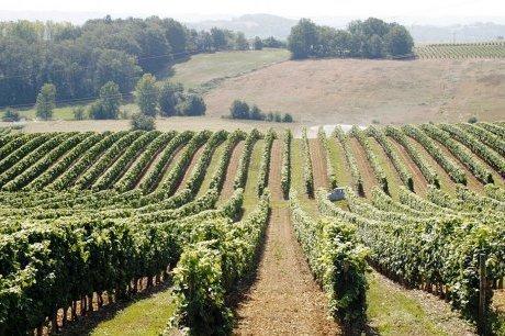 La fierté des vignes | Agritourisme et gastronomie | Scoop.it