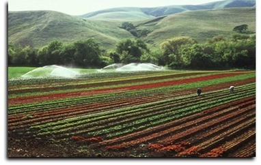 California Small Farm Conference | Local Economy in Action | Scoop.it