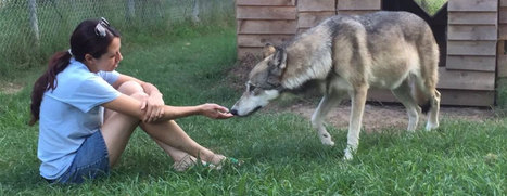 Saint Francis Wolf Sanctuary | Community Impact Newspaper | Advocating for Wildlife | Scoop.it