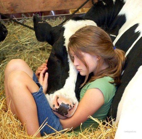 El veganismo como forma de vida anticapitalista y revolucionaria   Un poko de to!   Scoop.it
