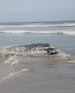 Concerns over Ghana whale deaths mystery - News24 | Ocean Times | Scoop.it