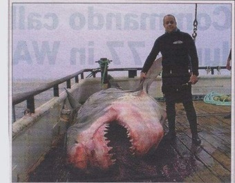 20-foot Great White Shark killed by 6-foot Man | The Top Information ... | Sharks!! | Scoop.it