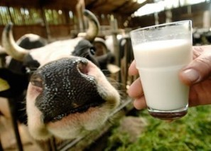 New study: Amish prove raw milk promotes health in children   Amish Research   Scoop.it