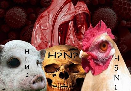 Création d'une variante mortelle à partir de la souche H5N1   Toxique, soyons vigilant !   Scoop.it