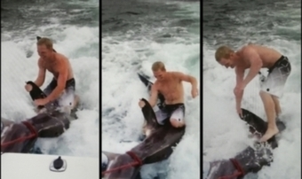 Man defends shark surfing | Otago Daily Times Online News : Otago, South Island, New Zealand & International News | All about water, the oceans, environmental issues | Scoop.it
