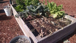 Arizona Gardeners: The 'Square Foot Gardening' system fits even small spaces | Tri-Valley Dispatch (Casa Grande AZ) | CALS in the News | Scoop.it