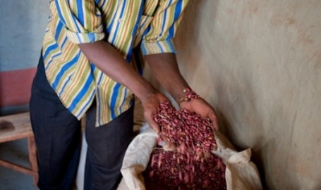 Rwanda: Weather-resistant crops boost food security in Rwanda | Climate Change, Agriculture & Food Security | Scoop.it