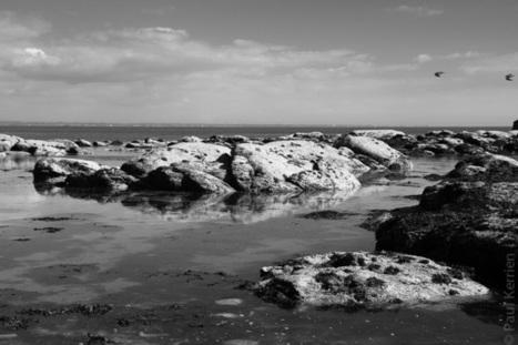 Bretagne - Finistère : sur l'estran, en noir et blanc (2 photos) | photo en Bretagne - Finistère | Scoop.it