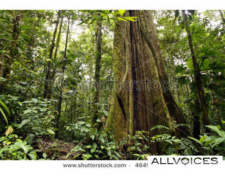 Deforestation in Amazon rainforests - allvoices | Deforestation In The Amazon Rainforest | Scoop.it