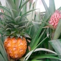 frutales tropicales - Centro de Jardineria Kuka | EL RACÓ DE LA JARDINERIA | Scoop.it
