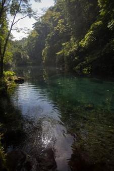 Las actividades humanas alrededor de las reservas selváticas afectan su biodiversidad | EFEcyt | Scoop.it