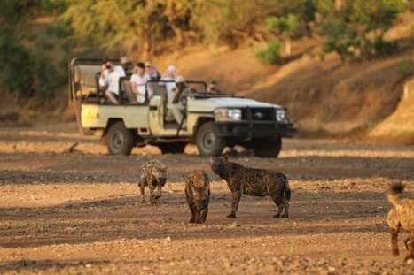 No Trophy Hunting in Botswana and Zambia? - National Geographic | project tanzania | Scoop.it