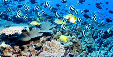 "This is huge! Obama to Create World's Largest Marine Reserve in Hawaii (""we should have a few more"") 