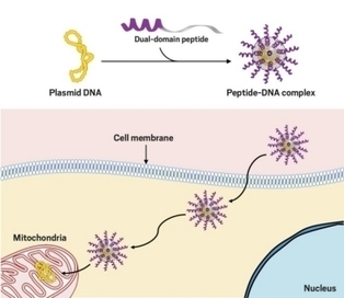 A step toward mitochondrial gene therapy | DNA and RNA Research | Scoop.it