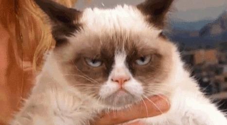 Grumpy Cat : un présentateur perd ses moyens en l'interviewant | Les chats c'est pas que des connards | Scoop.it