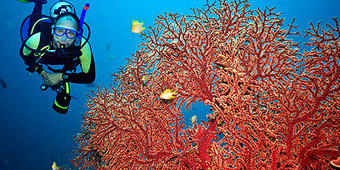 Scuba Diving in Maldives -Scuba Dive Jewel of the Indian Ocean. Divers' Reviews | Diving Destinations | Scoop.it