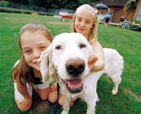 Labrador training: Stop Your Puppy Biting Barking and Wetting FAST   Dog Training Classes Alpharetta   Scoop.it