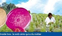 l'Inra obtient la 6ème vendange vierge de tout traitement | Le Vin et + encore | Scoop.it