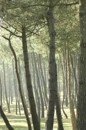 ACD et Xylofutur poussent la filière «bois-molécules» | Formule Verte | Veille molécules biosourcées | Scoop.it