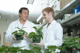 Plants provide accurate low-cost alternative for diagnosis of West Nile Virus - Science Codex   plant cell genetics   Scoop.it