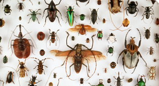 Events calendar - Edible Insects Wine Tasting | Natural History Museum | Entomophagy: Edible Insects and the Future of Food | Scoop.it