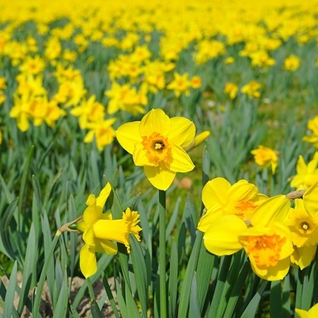 Saint David's Day (March 1) | Topical English Activities | Scoop.it