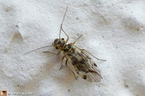 De si petits insectes qu'ils passent inaperçus... - Le JardinOscope, toute la vie animale de nos parcs et jardins | Les colocs du jardin | Scoop.it