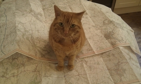 Cat Map Lets Users Add Cats All Over the World for Conservation ...   The Funniest Cats In The World!   Scoop.it
