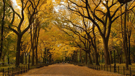 Fall foliage in NYC: Where to see fall colors around the city | The Miracle of Fall | Scoop.it