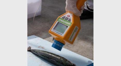 Radioactivité record pour des poissons à proximité de Fukushima | Japan Tsunami | Scoop.it