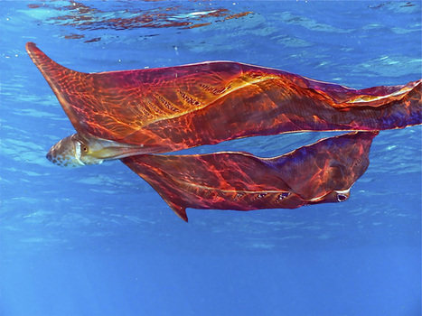 Discover 10 Surreal Creatures wow! Beauty in #nature | Limitless learning Universe | Scoop.it