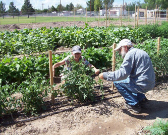 Learn how to 'grow' a business | Eastern Arizona Courier | CALS in the News | Scoop.it