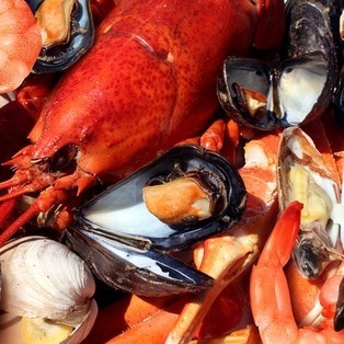The Birth of Restaurant-Supported Fisheries | News | Aquaculture Directory | Scoop.it