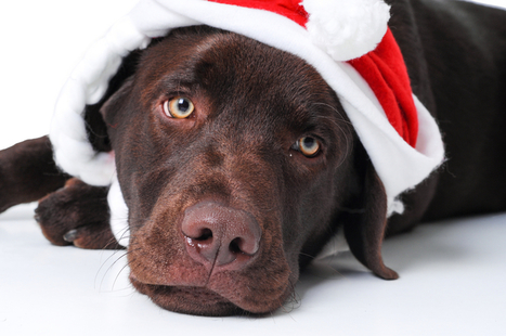 7 Dangerous Christmas Foods For Your Dog | Dog Lovers | Scoop.it
