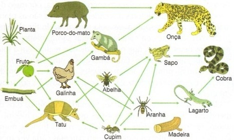 teia-alimentar.jpg (594x356 pixels) | Aulas de Biologia do 1º ano - Escola da Vila | Scoop.it