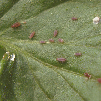 Identify and Control the Top 10 Garden Pests: Organic Gardening | 100 Acre Wood | Scoop.it