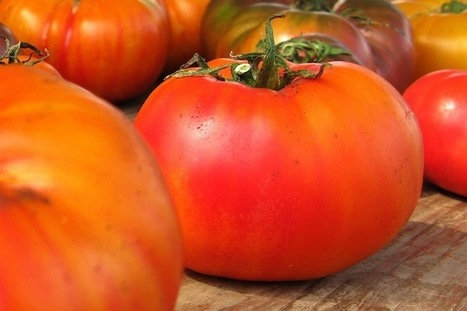 The Scientific Search for the Essence of a Tasty Tomato | Veille Scientifique Agroalimentaire - Agronomie | Scoop.it