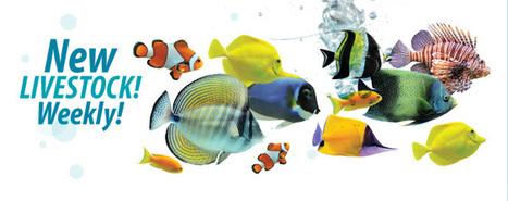 Custom Aquariums | Aquarium Illusions - Custom Aquariums, Fish, Coral | Action Towing Services Ltd | Scoop.it