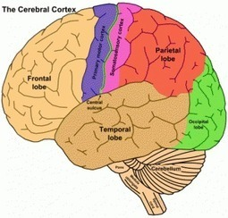 Facts or Fictions about the Teenage Brain: Is it all gasoline, no brakes? - Neuroanthropology   Psychology   Scoop.it