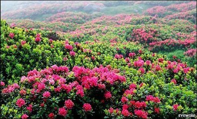 BBC - Earth News - How flowers conquered the world | Erba Volant - Applied Plant Science | Scoop.it