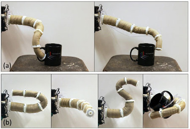 Jamming Grippers Combine to Form Robotic Elephant Trunk - IEEE Spectrum | The Robot Times | Scoop.it
