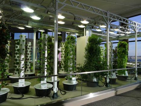 O'Hare Airport's Vertical Aeroponic Garden Takes Flight | tecnologia s sustentabilidade | Scoop.it