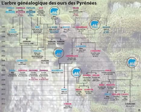 Ours : Ségolène Royal  n'en veut pas d'autres | Le flux d'Infogreen.lu | Scoop.it