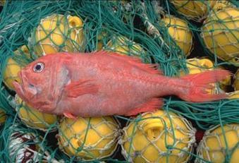 Vers une interdiction de la pêche en eau profonde ?    agro-media.fr   Actualité de l'Industrie Agroalimentaire   agro-media.fr   Scoop.it